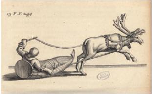 Figure 3 - Renne et traîneau (illustration tirée de l'Histoire           de la Laponie de Scheffer (Paris, 1678 ; coll. BNU)