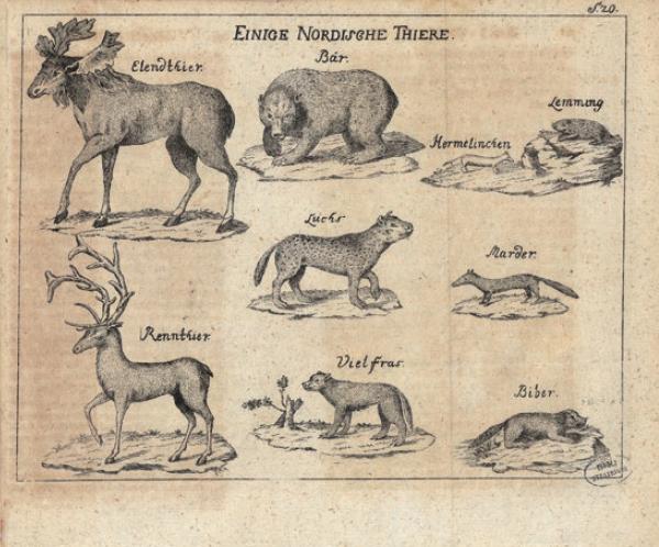 Figure 3 - Gravure extraite du second volume de l'Histoire           naturelle de la Norvège (édition de Copenhague, 1754), représentant           quelques animaux des pays du Nord (coll. BNU).