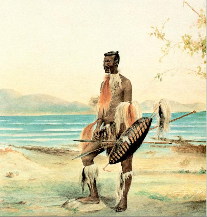 Figure 1 – Guerrier zoulou. Aquarelle de David           Canty (coll. Museum Africa, Johannesburg)