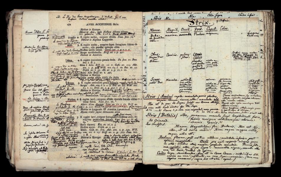 Figure 4 – Linné, Carl von, , Vienne, Trattner, 1767-1770,             t.1, p.132: aperçu du «bricolage savant» opéré par la             juxtaposition d'annotations inscrites sur différents supports             (marges, page interfoliée, languettes de papier et feuille             volante; coll. BNU)